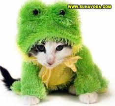 slike maca