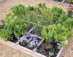 square foot vegetable garden
