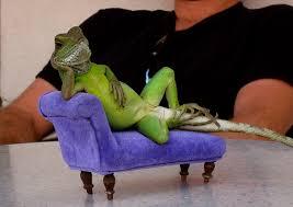funny lizard pics