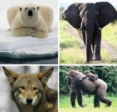 endangered animal s