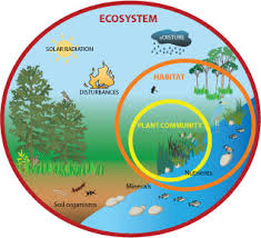 ecosystem images