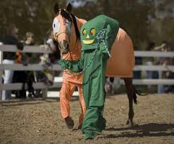 costumes for horses