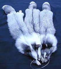 pearl fox