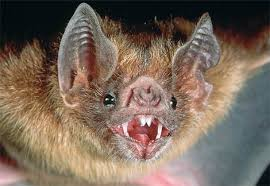 national geographic bats
