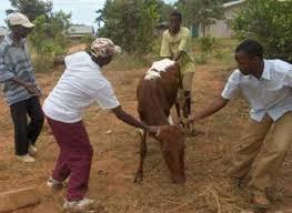 breeding livestock