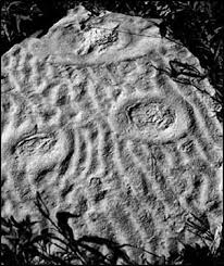 images of fossils