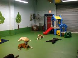 dog rooms