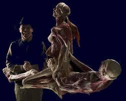 body world exhibits