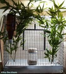 finch breeding cage
