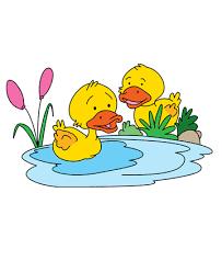 cartoon baby duck