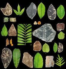 african rainforest plants