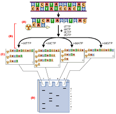 dna sequencing method