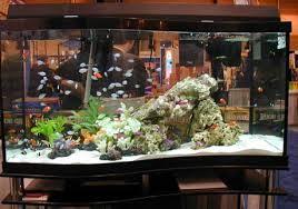 salt water aquarium tank
