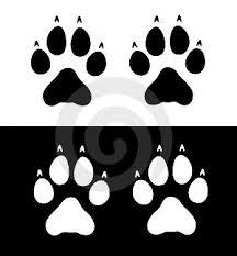 cat pawprints