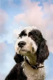 list of dog types