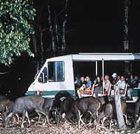 night safari at singapore