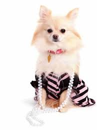 dogs fashion