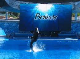 believe seaworld