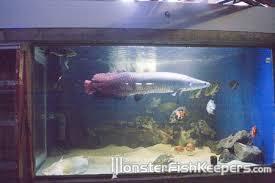 1000 gallon fish tanks