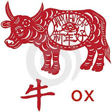 chinese new year the year of the ox