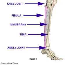 leg parts