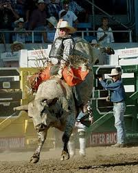 bull riding photos
