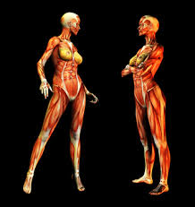 names of the muscles in the human body