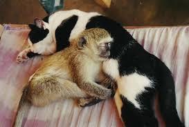 monkey kitty