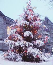outside christmas trees