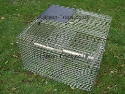 magpie traps