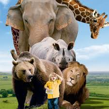 big 5 animals