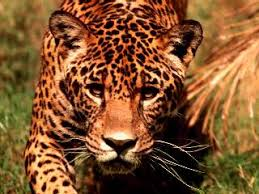 endangered animals in the rainforests
