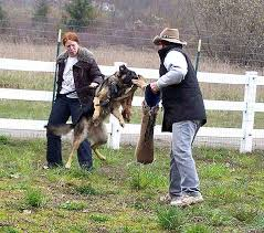 german shepherd attack dogs