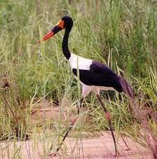 rare african animals