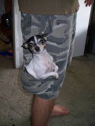 pocket size dog