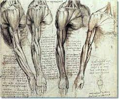 da vinci anatomy drawings