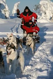 husky dog sledding
