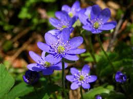 kwiaty w polsce