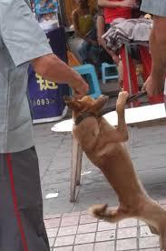dog catch pole