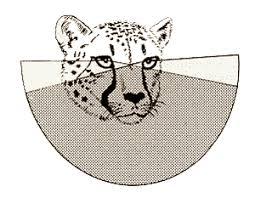 predators eyes