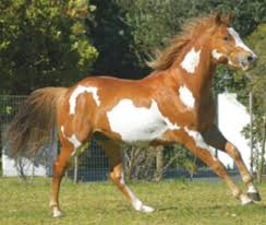horse breeds and pictures