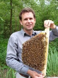 honey bee breeding