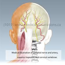 medical head