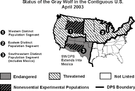 gray wolves population