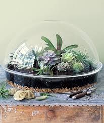 garden terrariums