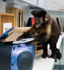 helping monkeys