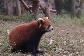 china wild life