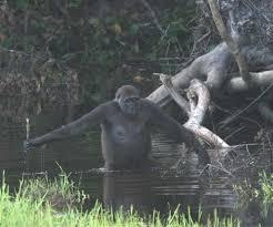 gorilla food web