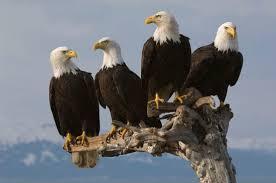 Department of Eagles Dig SMiLE