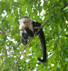 monkey in the rain forest